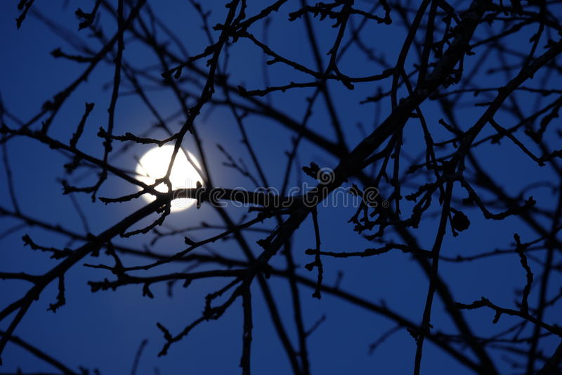 Предпосылка луны стоковое фото