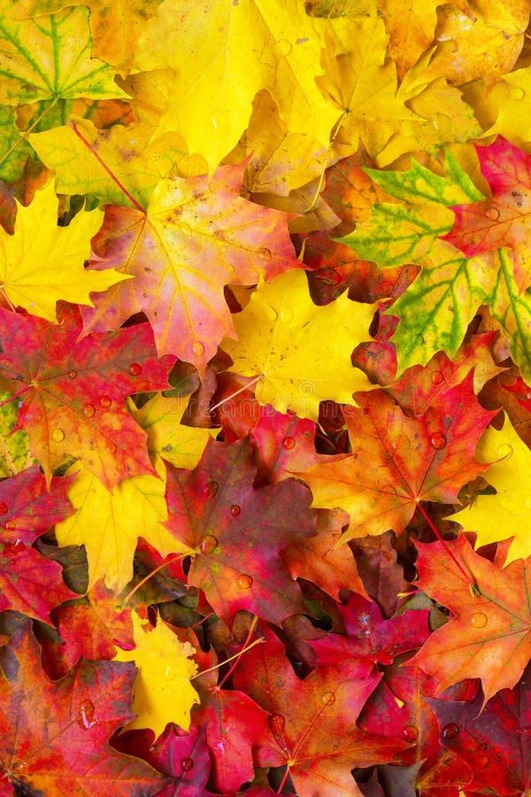 Предпосылка упаденных листьев осени стоковое изображение