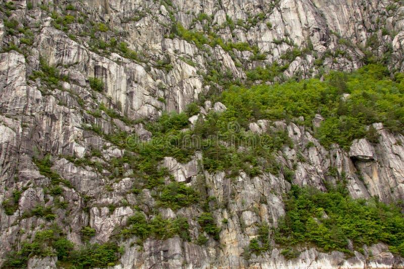 Предпосылка фланка горы с деревьями стоковое изображение
