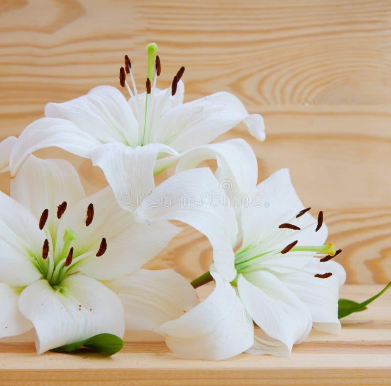 предпосылка цветет лоснистая белизна лилии 2 стоковая фотография rf
