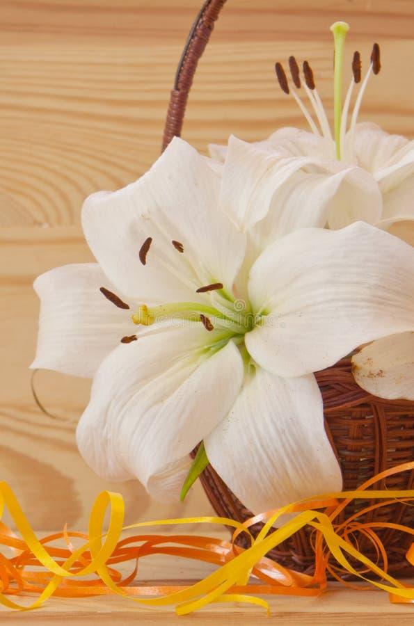 предпосылка цветет лоснистая белизна лилии 2 стоковое фото rf