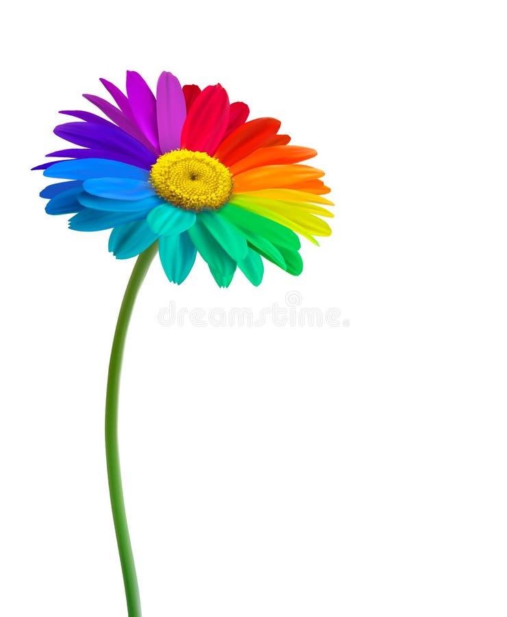 Предпосылка цветка маргаритки радуги бесплатная иллюстрация