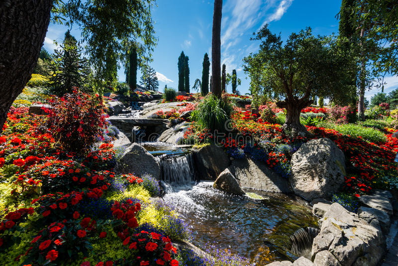 Предпосылка цветка Garden стоковая фотография rf