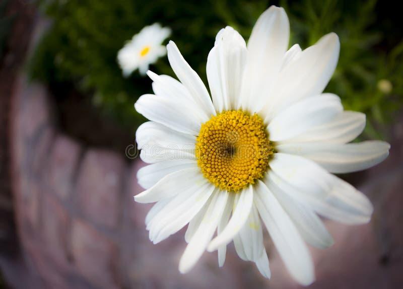 Предпосылка цветка Garden стоковое изображение rf