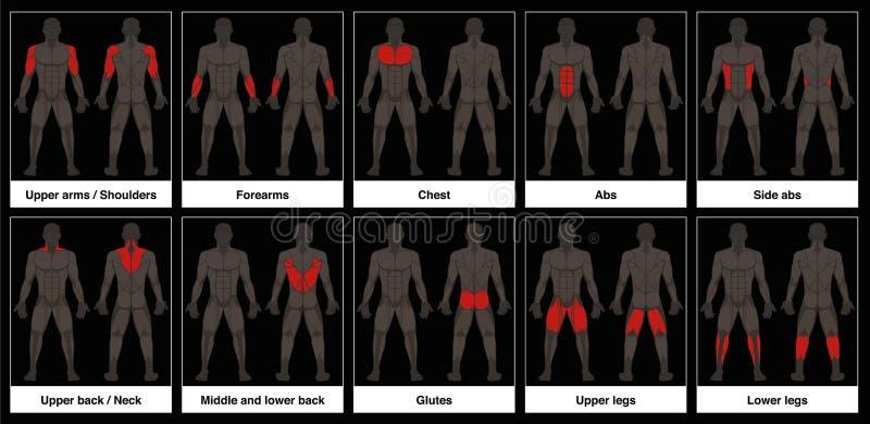 Предпосылка частей мужского тела диаграммы мышцы черная иллюстрация штока