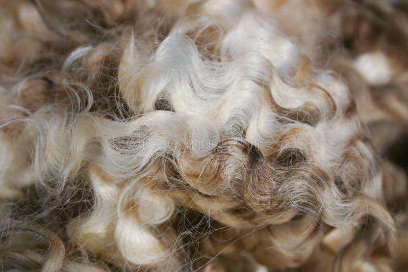 Предпосылка шерстей merino Новой Зеландии стоковое изображение rf
