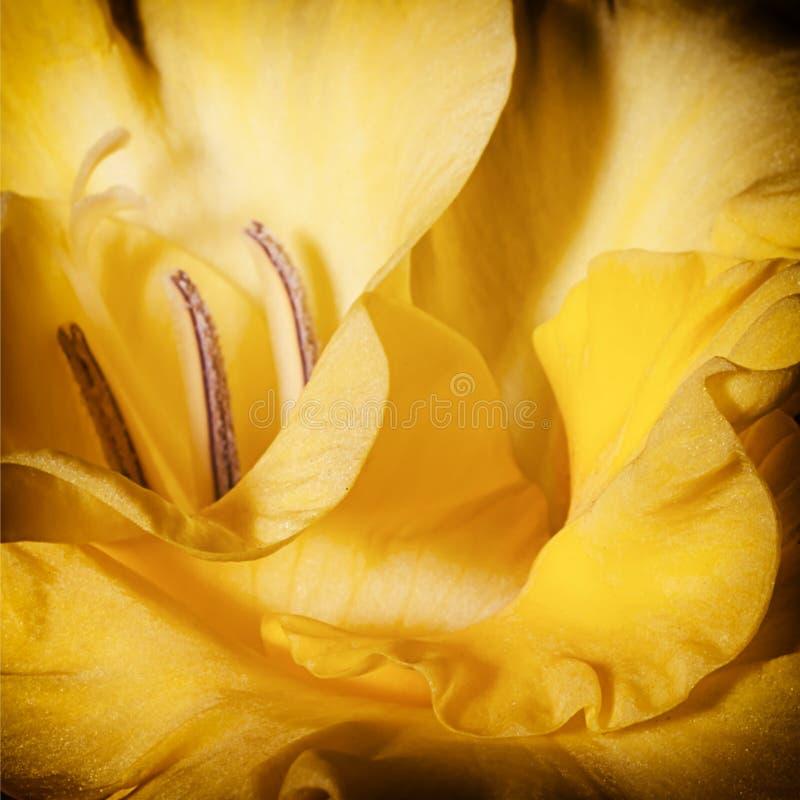 Предпосылка yellowl флоры стоковое изображение