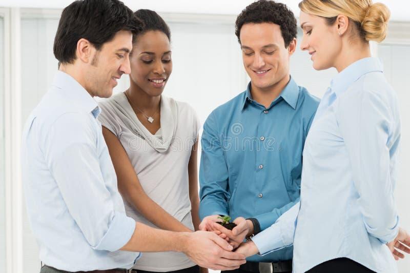Предприниматели держа росток стоковые изображения