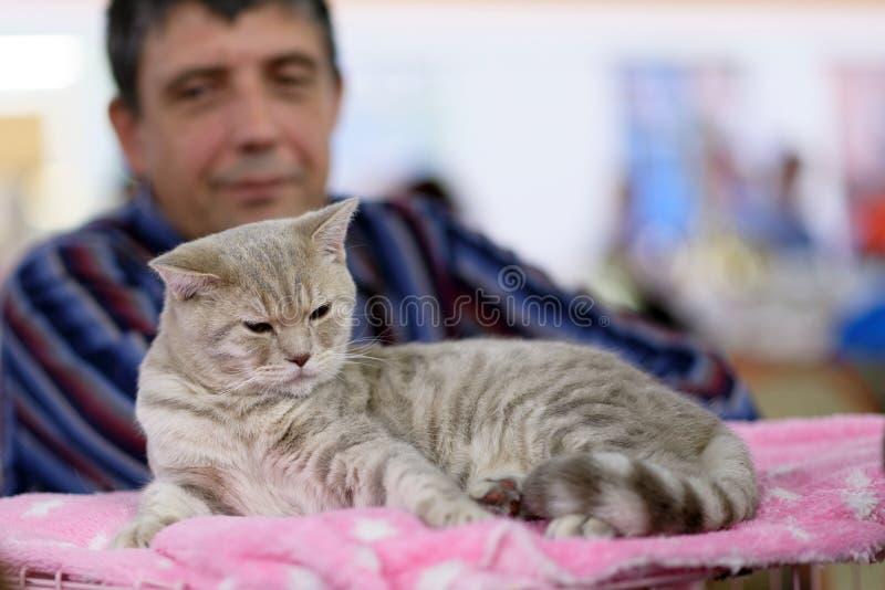 Предприниматель с его котом стоковая фотография