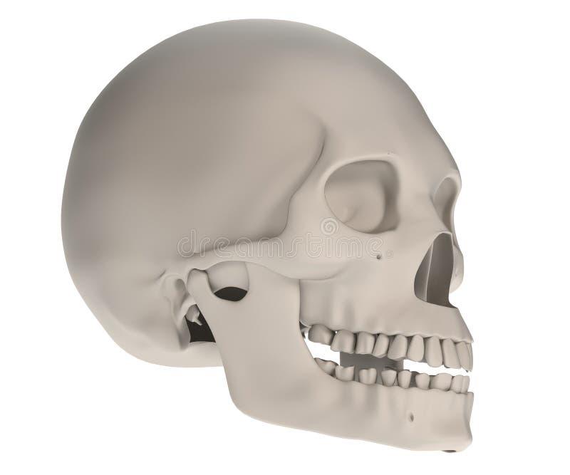 Представьте женского черепа иллюстрация вектора
