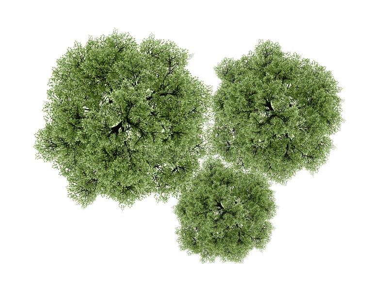 Представленные деревья изолированными на белизне иллюстрация штока