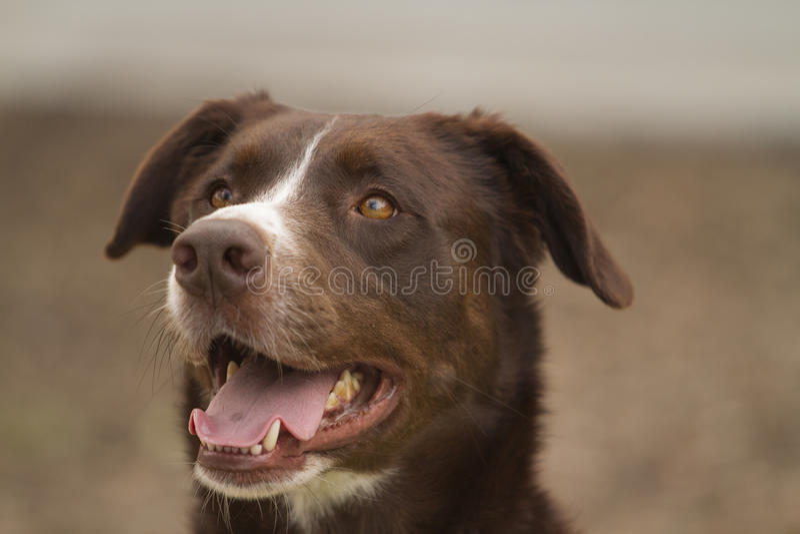 Представлять собаки стоковое фото