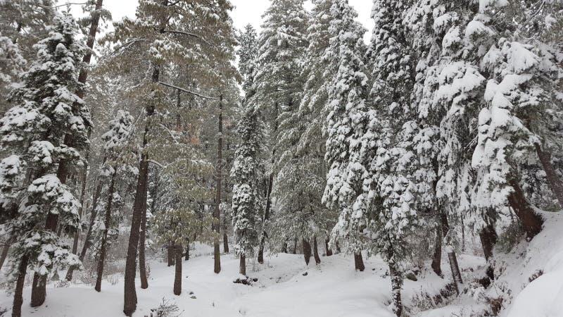 Предусматриванный при красота Азии красивая Пакистана снега mesmerising путешествуя зима назначения стоковое фото