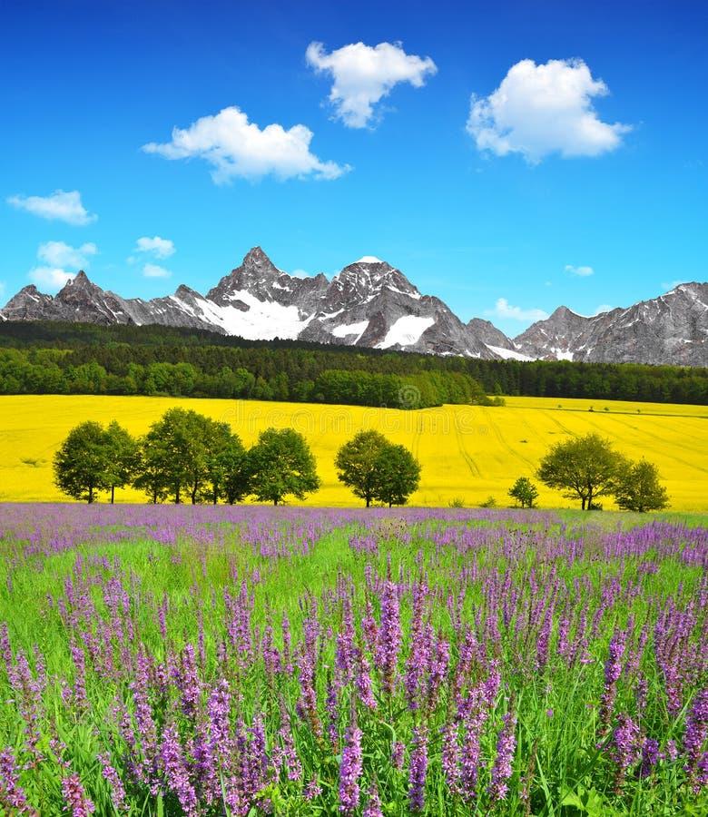 предыдущая весна горы ландшафта стоковая фотография rf