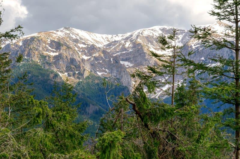 предыдущая весна горы ландшафта стоковые изображения rf