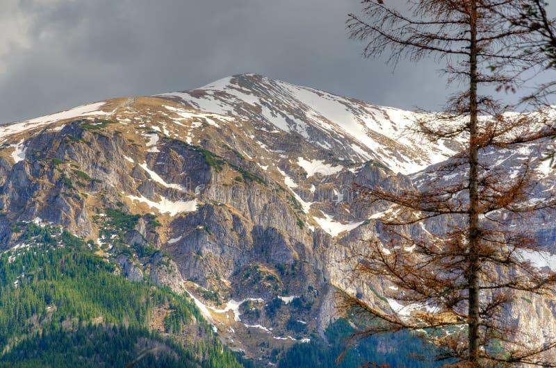 предыдущая весна горы ландшафта стоковое изображение rf