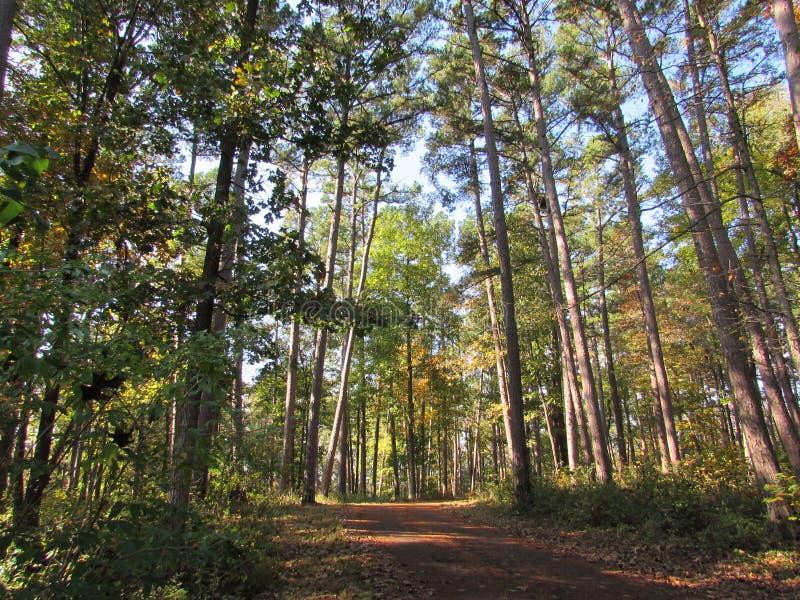 Предыдущая тропа грязи осени через высокие деревья стоковое фото