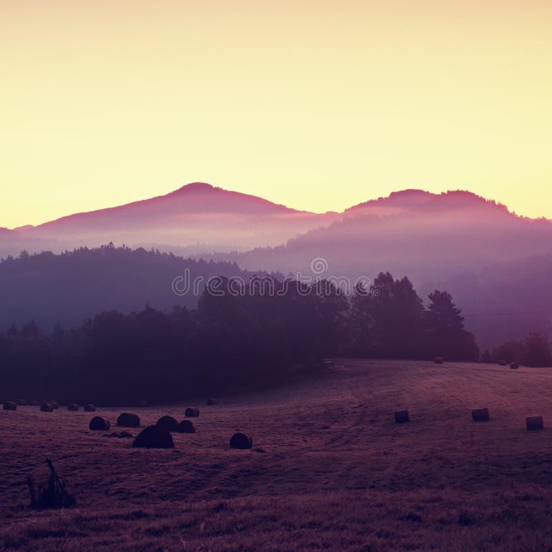 Предыдущее утро осени в лугах, изморозь на траве в туманной долине стоковое изображение