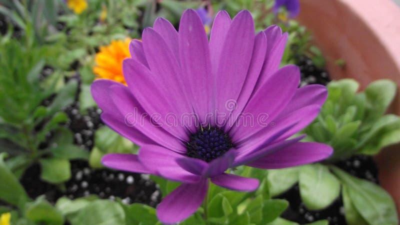 Предыдущее цветене весны стоковые изображения rf
