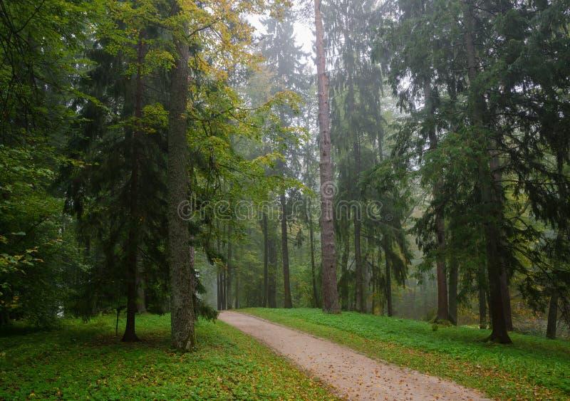 Предыдущий лес осени после дождя с туманом стоковое фото rf