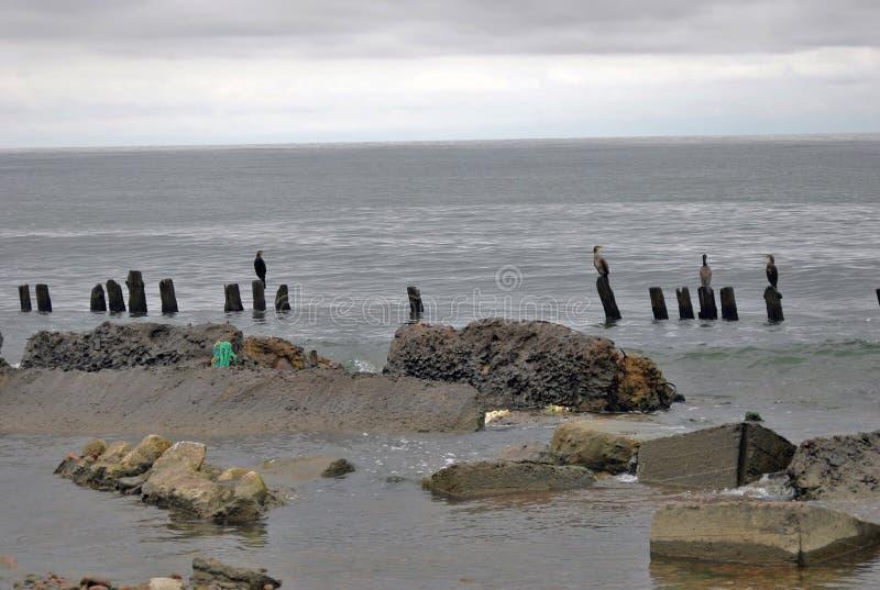 Прибалтийский вертел Взгляд Балтийского моря стоковое изображение rf