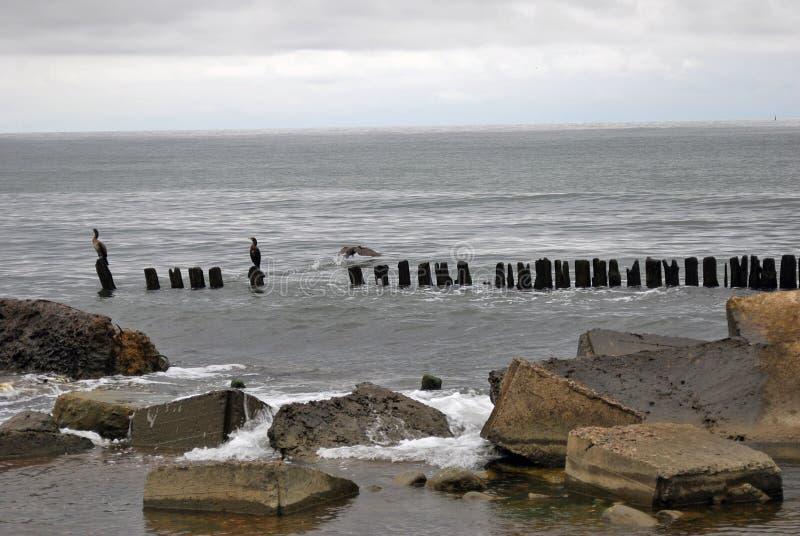 Прибалтийский вертел Взгляд Балтийского моря стоковые фотографии rf