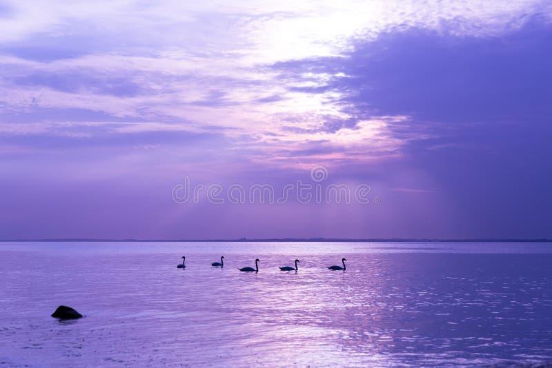 Прибалтийское побережье 4 стоковые фото