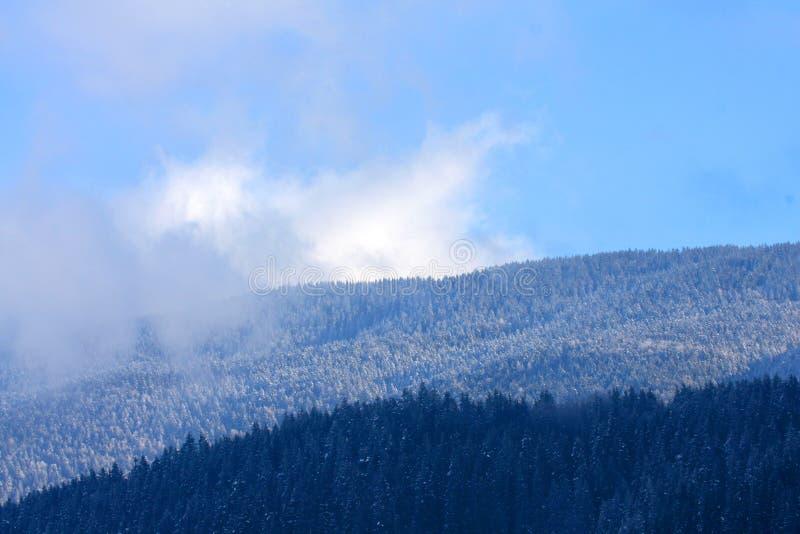прибалтийское zelenogradsk зимы шторма России quay стоковые фото