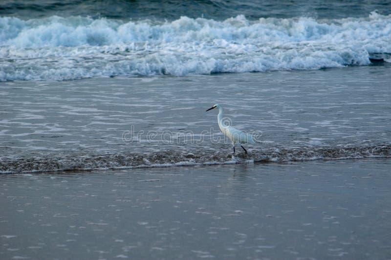 прибой рыболовства птицы стоковое фото