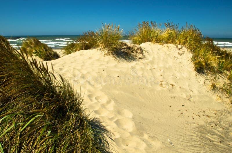 Прибрежная песчанная дюна стоковые фотографии rf