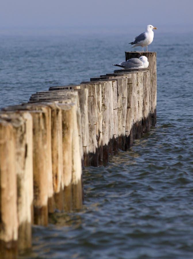 Download прибрежное предохранение 01 Стоковое Фото - изображение насчитывающей gendarme, европа: 18377304