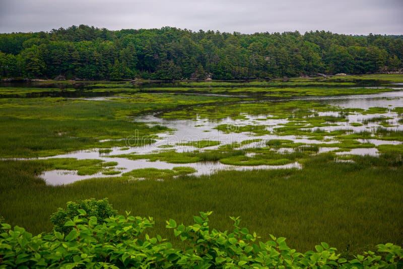 Прибрежное приливное болото в Мейне, США стоковое изображение rf