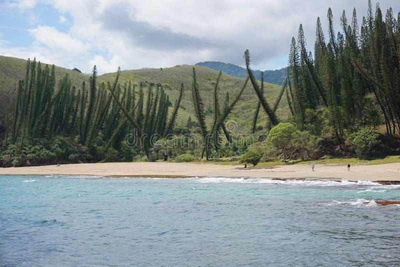 Прибрежные сосны Новая Каледония пляжа ландшафта стоковая фотография
