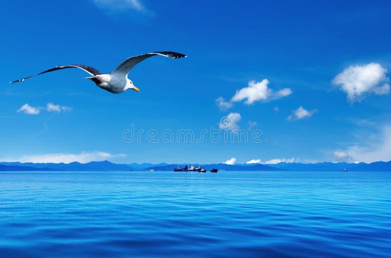 прибрежный взгляд стоковое фото