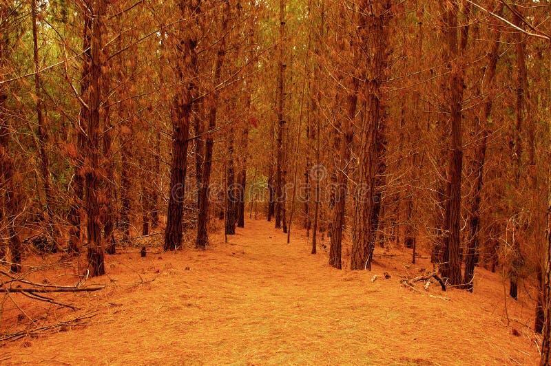 Прибрежный лес запаса Чили леса Laguna Torca стоковые фото