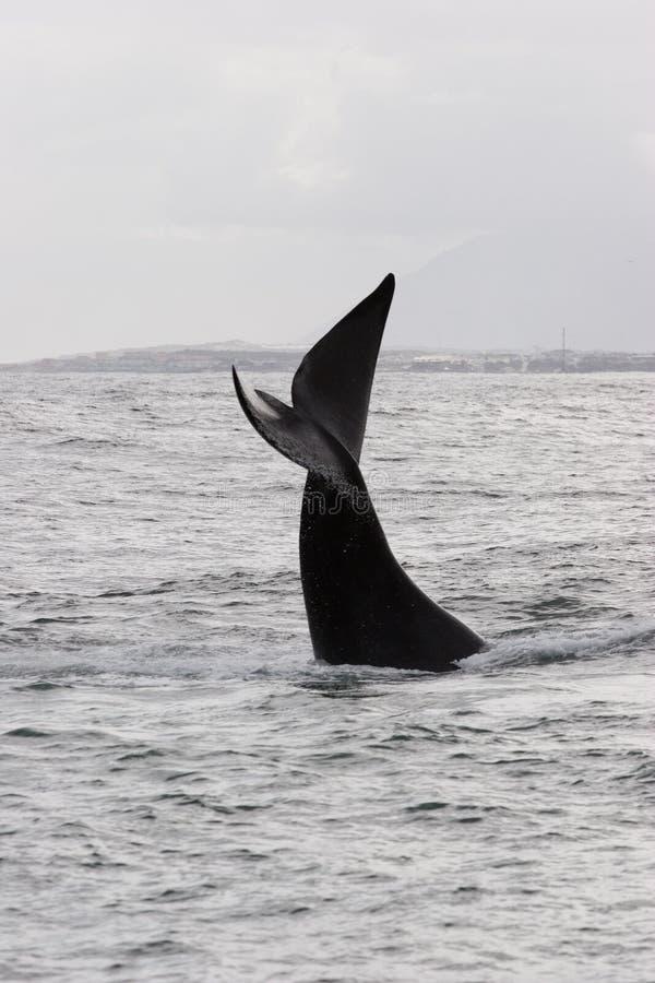 Приветствие кита