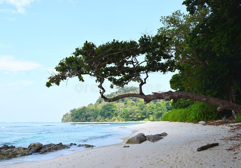Привлекательное дерево с красивым Seascape - пляж Radhanagar, остров Havelock, Andaman & Nicobar, Индия стоковые фото