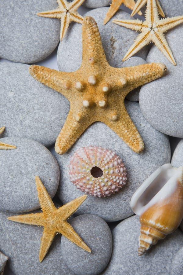 привлекательные seashells камушков стоковое изображение