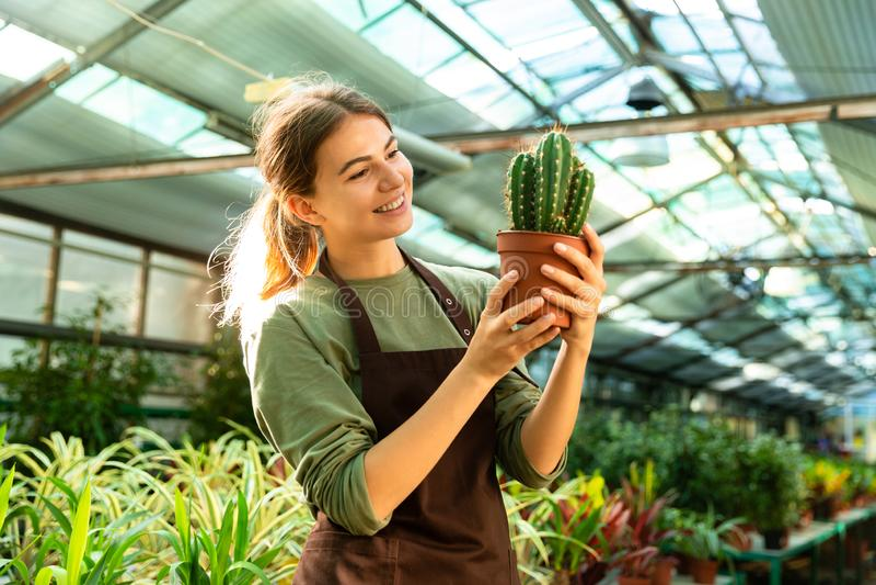 Привлекательный милый кактус завода удерживания садовника женщины в парнике стоковое фото rf