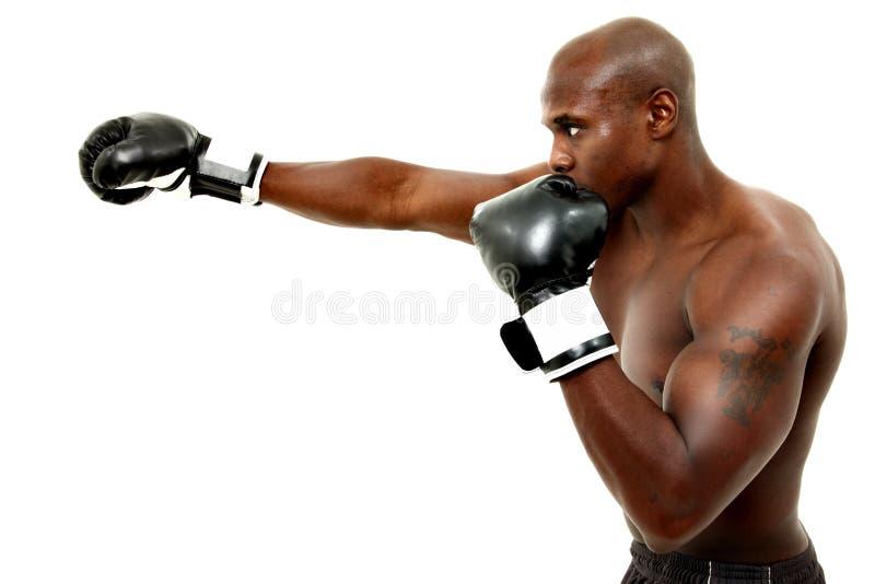 Привлекательный черный мыжской боксер над белизной стоковые фото