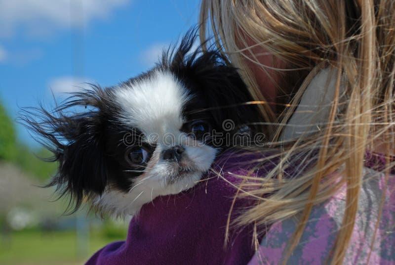 привлекательный щенок собаки малый стоковые изображения rf