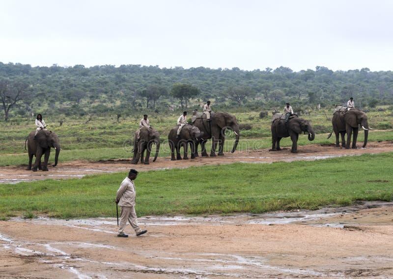 Привод слона ренджерами стоковое изображение
