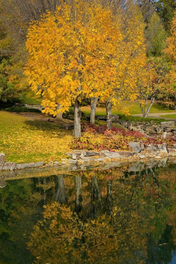 привлекательная женщина портрета наготы клена листьев заволакивания красотки осени стоковое фото