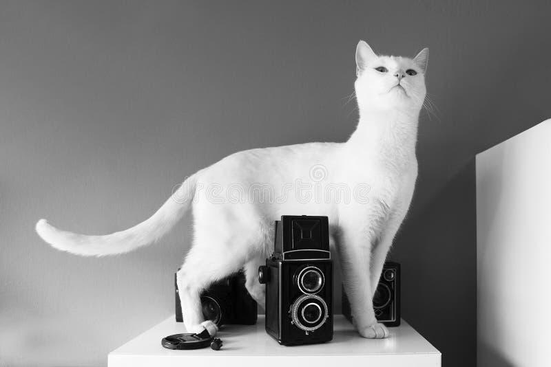 Привлеките животных интереса ` s природы стоковое фото