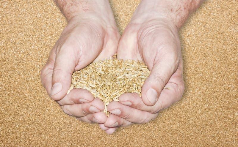 Пригорошня зерна стоковое фото