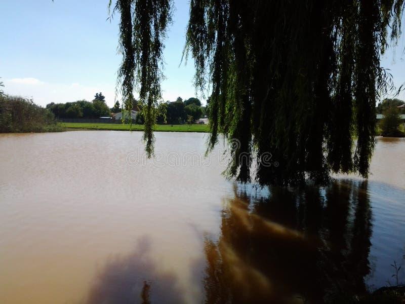 Пригородное озеро стоковое изображение rf