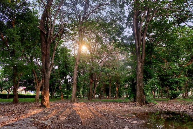 Пригородный лес стоковые изображения