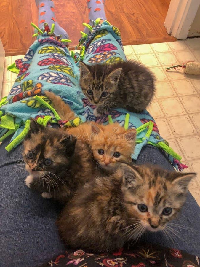 Приемные котята сидя на подоле на поле bathroom смотря вверх любопытный с одеялом стоковое фото rf