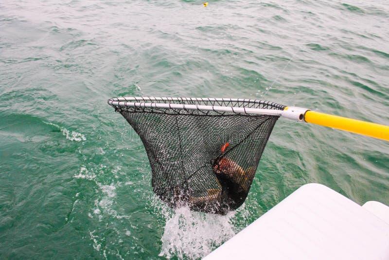 Приземляться большая рыба стоковое изображение rf