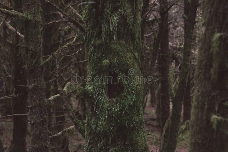 Призраки леса стоковое фото rf